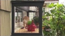 Feng Shui for Felines & Outdoor Cat Enclosures